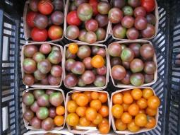 Little tomato jewels...last of the season